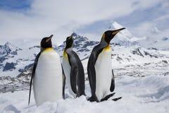 Tres pingüinos de rey en nieve Foto de archivo libre de regalías