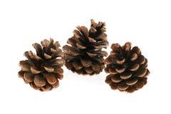 Tres pino-conos en un fondo blanco Fotografía de archivo