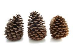Tres pinos Foto de archivo libre de regalías