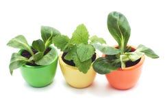 Tres plantas en tazas de cerámica varicolored. Foto de archivo