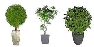 Tres plantas potted Fotografía de archivo