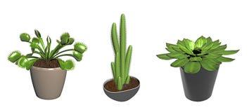 Tres plantas potted del cacto Imagenes de archivo