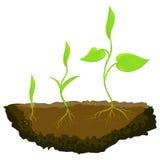 Tres plantas que crecen en la tierra Imagenes de archivo