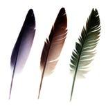 Tres plumas Foto de archivo libre de regalías