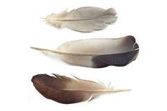 Tres plumas Fotografía de archivo libre de regalías