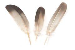 Tres plumas aisladas Imágenes de archivo libres de regalías