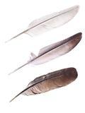Tres plumas de la paloma en blanco Fotografía de archivo