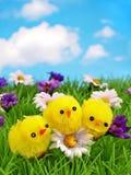 Tres polluelos alegres en una fila Imagenes de archivo