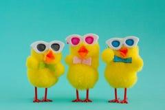 Tres polluelos maravillosos que llevan las gafas de sol en Aqua Background imagen de archivo libre de regalías