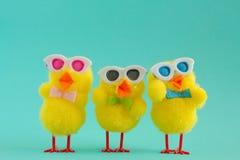 Tres polluelos maravillosos que llevan las gafas de sol en Aqua Background imagen de archivo