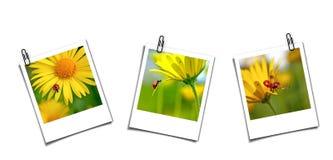 Tres postales con los ladybugs Foto de archivo libre de regalías