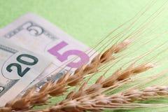 Tres puntos de mentira del trigo en dólares de EE. UU. Un primer de veinte y cinco billetes de dólar y espiguillas del grano El c imagenes de archivo