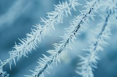 Tres ramas cubiertas con los cristales de hielo nevosos Foto de archivo libre de regalías