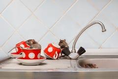 Tres ratas jovenes en la cocina Una rata se sienta en taza roja imágenes de archivo libres de regalías