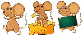Tres ratones juguetones Fotografía de archivo
