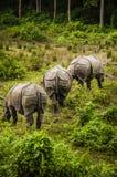 Tres rhinos en selva Foto de archivo