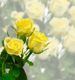 Tres rosas Foto de archivo