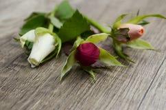 Tres rosas Imágenes de archivo libres de regalías