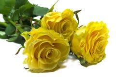 Tres rosas amarillas Foto de archivo