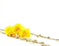 Tres rosas amarillas entre las ramificaciones del sauce Fotos de archivo libres de regalías
