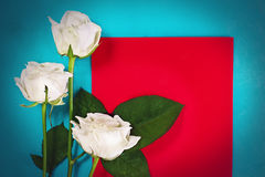 Tres rosas blancas con la tarjeta roja Imágenes de archivo libres de regalías