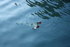 Tres rosas en el mar Foto de archivo libre de regalías