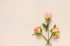Tres rosas en el papel Fotos de archivo