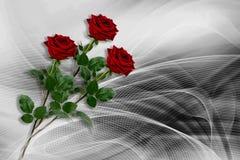 Tres rosas rojas en un fondo gris-negro imagenes de archivo