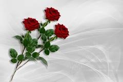 Tres rosas rojas mienten en un fondo blanco grisáceo imagenes de archivo