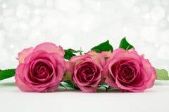 Tres rosas rosadas. Fotos de archivo