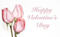 Tres rosas rosadas para el día de tarjeta del día de San Valentín Imagen de archivo