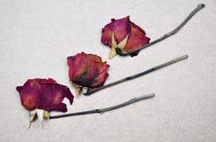 Tres rosas secas Fotos de archivo