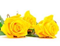 Tres Rose amarilla plana en el fondo blanco Foto de archivo