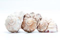 Tres seashells imagen de archivo libre de regalías