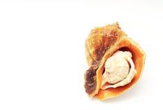 Tres seashells aislados en un fondo blanco Imagen de archivo