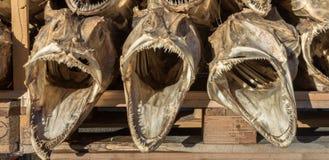 Tres secaron las cabezas de los pescados del bacalao apilado en una plataforma Imagen de archivo