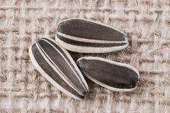 Tres semillas de girasol Imagenes de archivo