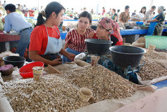Tres semillas de girasol de la venta de las muchachas en el mercado Imágenes de archivo libres de regalías
