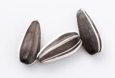 Tres semillas de girasol en blanco Imagen de archivo libre de regalías