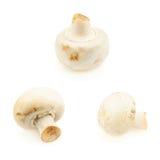 Tres setas del champiñón Imágenes de archivo libres de regalías