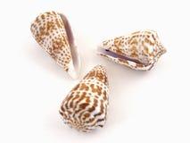 Tres shelles Fotos de archivo libres de regalías