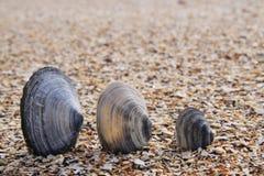 Tres shelles en la playa imagenes de archivo