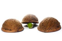 Tres shelles y un guisante Foto de archivo libre de regalías