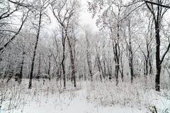 Tres in snow Stock Photos