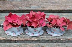 Tres tazas de hortensia Fotos de archivo