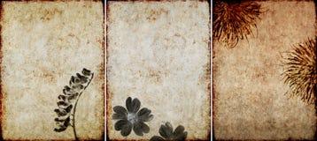 Tres texturas encantadoras del fondo Fotos de archivo libres de regalías