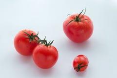 Tres tomates grandes y un pequeños en blanco Imágenes de archivo libres de regalías