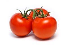 Tres tomates madurados vid Imágenes de archivo libres de regalías