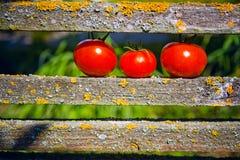 Tres tomates maduros Imagen de archivo