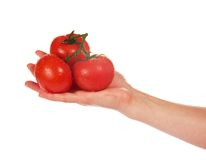 Tres tomates maduros rojos con las colas en mano femenina Imágenes de archivo libres de regalías
